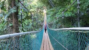 The Rope Bridge